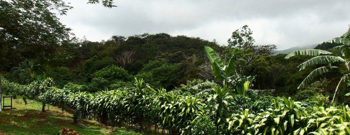 Az organikus (bio) kávéról