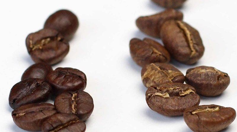 A kávé fajtái