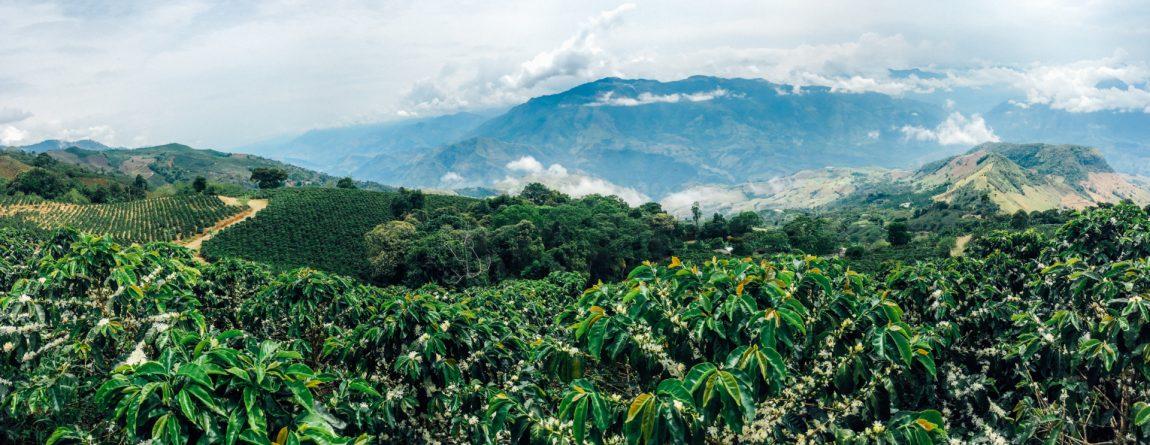 Kávé és éghajlat